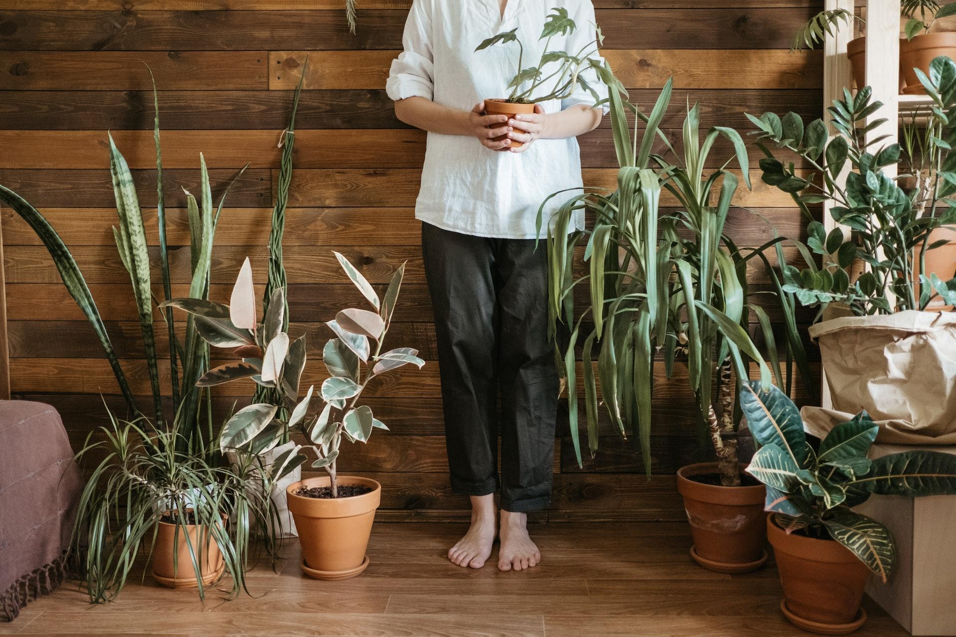 piante da appartamento che depurano l'aria